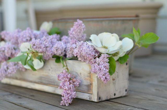 Lilacs-FlowerPatchFarmhouse.com-1-of-34