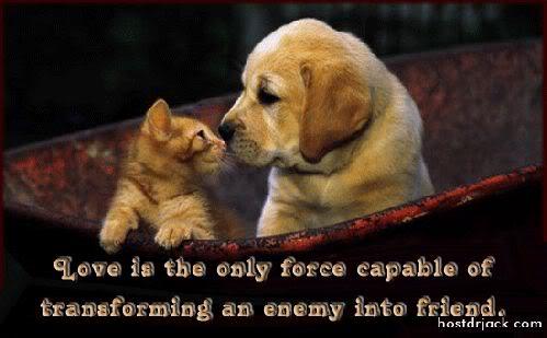 enemyintofriend